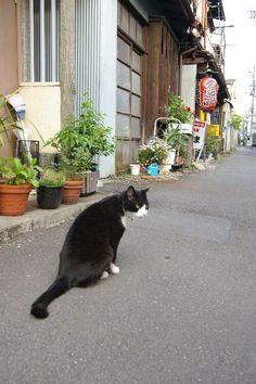 Nezu, Taito city, Tokyo 根津の猫