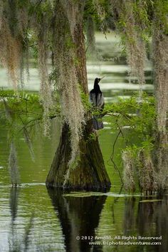 Cypress Gardens Monk's Corner, SC It had cooled the mug of a low country summer.  a woodland walk at Cypress Gardens a small bog. pitcher plants and minute Venus Fly Traps muddy shoes... the sun  going toward mid-afternoon thru the native pines... one was golden orange reddish .. then a true royal blue, bright pink as in hot pink, purple-red and a snow white.  FUNGUS in color wheels of endless hues rainbow colors of incredible brightness. a defining moment, a mother's breath dripping thru…