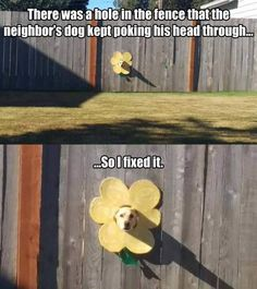 Fixed it! This is too adorable! #dogs #cute #adorable #flowers #funny