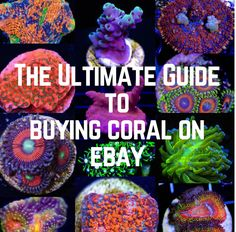 Research and buy the hottest corals on Ebay at prices your won't believe.  Our Ultimate Guide will show you everything you need to know.