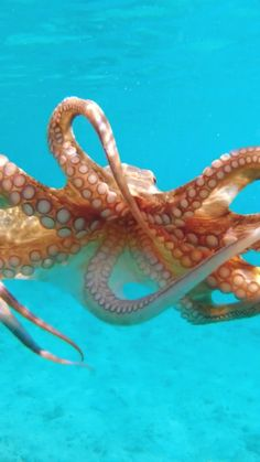 Beautiful Sea Creatures, Beautiful Nature Scenes, Animals Beautiful, Cute Funny Animals, Cute Baby Animals, Animals And Pets, Underwater Animals, Ocean Creatures, Caravaggio