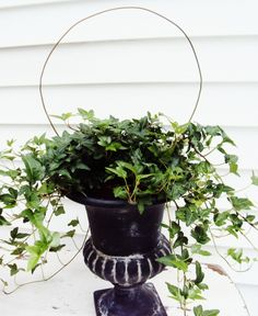 How to Make a Topiary From a Coat Hanger from Thistlewood Farms