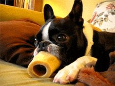 Funny Dog GIFs Giant Tongue