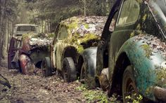 Vintage Cars Covered with Moss