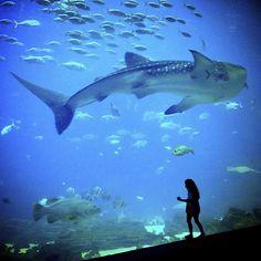 Aquarium in Atlanta, Georgia, United States of America
