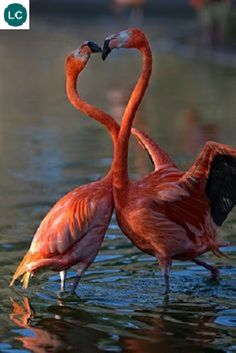 Love Birds, Beautiful Birds, Animals Beautiful, Animals And Pets, Funny Animals, Cute Animals, Flamingo Pictures, Ocean Creatures, Big Bird