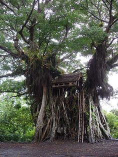 A traditional treehouse in remote Yakel village, Tanna isalnd, Vanuatu.