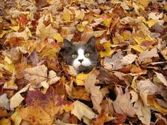 Image result for fall leaf pile