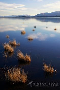Tranquil scene of Lake Pukaki and grasses, Autumn, McKenzie Country