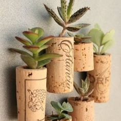 How to make wine cork magnet planters with succulents, magnets, wine corks. Full tutorial with pictures on how to make wine cork magnet planters for fridge. Mini Vasos, Wine Cork Crafts, Succulents Garden, Succulent Planters, Succulent Gardening, Small Succulents, Small Plants, Garden Planters, Succulent Display
