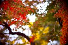 Autumn leaves by Akiatoshiaki