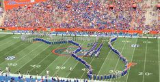 Five best gameday traditions in Gainesville Gator Game, Florida Gators, Stop Motion, Traditional, Sports, Image, Hs Sports, Sport