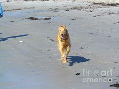 Ocean Run with a Golden Retriever