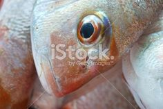 Snapper, a day's catch Royalty Free Stock Photo Animal Body Parts, Kiwiana, Image Now, New Zealand, Royalty Free Stock Photos, Twitter, Holiday, Summer, Pink