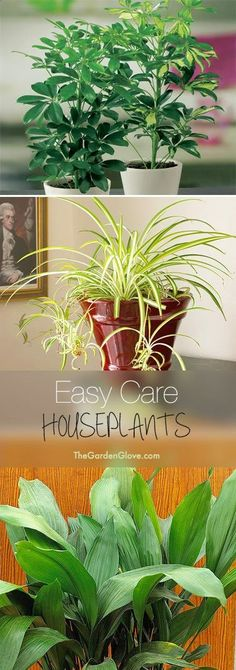 Easy Care Houseplants  Tips  ideas for easy to grow and hard to kill houseplants!