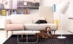 Noti - Teddy bear #new #collection #pedrali #lamp #design #furniture #designproject #interiordesign #decoration #decor #love #designer #safakcak #home #house #celebrity #fashion #style #luxuryart #loft #art #artist #creative #industrialdesign #beautiful #designinspiration #architecturelovers #architecture #designlovers #dog - Architecture and Home Decor - Bedroom - Bathroom - Kitchen And Living Room Interior Design Decorating Ideas - #architecture #design #interiordesign #diy #homedesign…