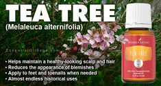 Tea Tree essential oil from Young Living free in April with qualifying order. Tea Tree Essential Oil, Essential Oils, Melaleuca, Tea Tree Oil, Young Living, Aromatherapy, Sage, Essentials, Healing