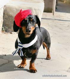Crusoe the Celebrity Dachshund Funny Dachshund, Dachshund Love, Funny Dogs, Funny Animals, Cute Animals, Daschund, Cute Puppies, Cute Dogs, Dogs And Puppies