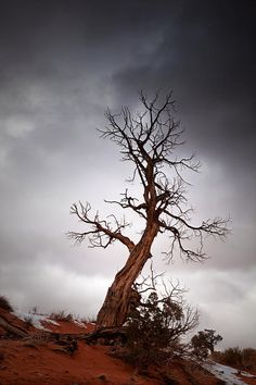 ✯ The Lonley Tree