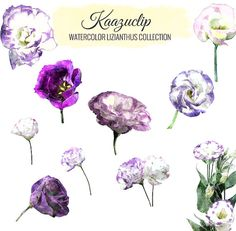 Watercolor Lizianthus Collection  Commercial and by kaazuclip