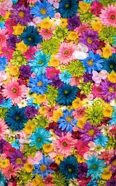 Bright and colorful flowers earth / flower mobile wallpaper Flower Iphone Wallpaper, Butterfly Wallpaper, Flower Backgrounds, Colorful Wallpaper, Wallpaper Backgrounds, Mobile Wallpaper, Wallpaper Earth, Beautiful Nature Wallpaper, Beautiful Flowers