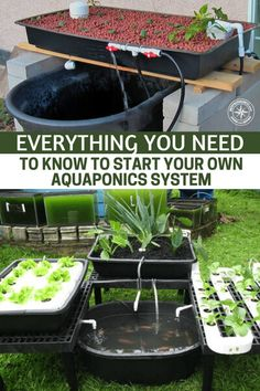 Hydroponic Gardening Ideas Everything You Need to Know to Start Your Own Aquaponics System - Aquaponics is an efficient integration of aquaculture and hydroponics in an automatic system that fuels growing plants and breeding edible fish altogether. Aquaponics System, Hydroponic Farming, Aquaponics Greenhouse, Fish Farming, Aquaponics Fish, Indoor Aquaponics, Diy Hydroponics, Hydroponic Growing, Hydroponic Plants
