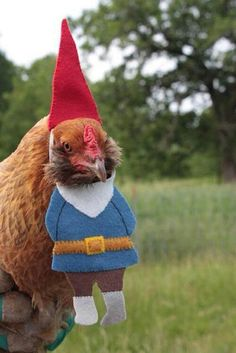 Gnome in disguise!! I can't stop laughing. Diney, you need this for your beautiful new patio garden!!!
