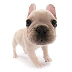 Artlist Collection THE DOG (French Bulldog) — Hola!