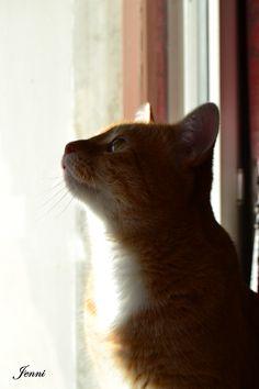 Animal Pictures, Cats, Animals, Gatos, Animales, Animaux, Pet Pictures, Animal, Cat