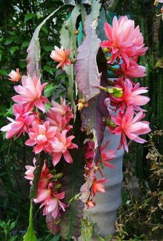 Beautiful Flowers Images, Flower Images, Exotic Flowers, Flowers Nature, Succulents Garden, Garden Plants, Planting Flowers, Orchid Cactus, Cactus Flower