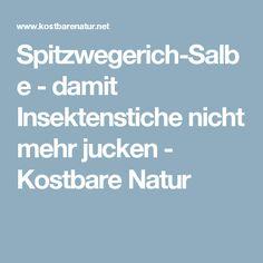 Spitzwegerich-Salbe - damit Insektenstiche nicht mehr jucken - Kostbare Natur