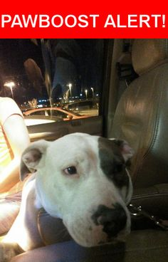 Is this your lost pet? Found in Colorado Springs, CO 80908. Please spread the word so we can find the owner!  White/black  Nearest Address: Black Forest Road, Baker Street Colorado Springs, CO