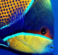 48 best reef tanks images reef tanks coral aquarium coral reefs