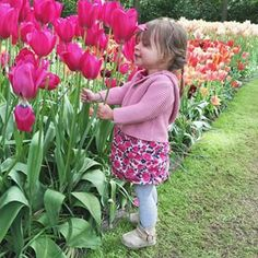 She slept most of the time we were at the tulip fields (of course her longest nap during our travels would be during the tulip festival!!) but when she woke she was so excited to find these giant pink #tulips as big as her head!!