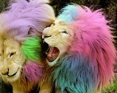 Party Lions