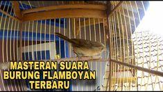 99 Masteran Burung Kicau Ideas Bikins Wind Sock Pacitan