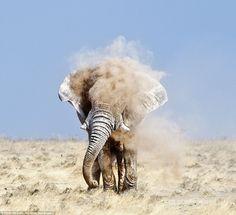 4 ton elephant shakes dust off back!