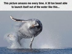 30 Ton Beast