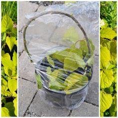 Den Lykkelige Hagen : Stiklingsformering av busker - syrinhortensia Annabelle Glass Vase, Garden, Decor, Garten, Decoration, Lawn And Garden, Gardens, Decorating, Gardening