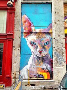 Cat LYON france