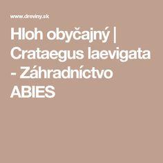 Hloh obyčajný | Crataegus laevigata - Záhradníctvo ABIES