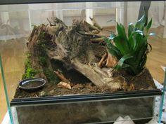 desert tarantula terrarium Google Search Tarantula