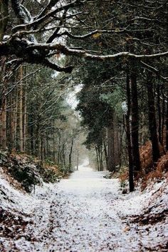 this-is-englanddd: Delamere Forest Park, Cheshire. shaun wilson © enchantedengland: Delamere Forest Park is the largest area of woodland in the county of Cheshire; Winter Szenen, Winter Walk, Winter Road, Cheshire England, Forest Path, Snow Forest, Pine Forest, All Nature, Walk In The Woods