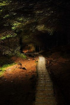 Forest Path, Wicklow, Ireland    A little scary but I like it.