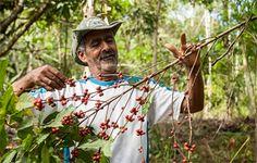 Águas de Pontal: Agroflorestas se espalham pelo país: cultivo com p...