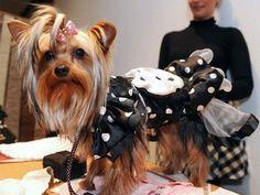 El amor por las mascotas crece y los gastos también | Dinero en Imagen.com
