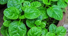 5 Super-Fast Indoor Vegetables You Can Grow In About A Month | Off The Grid News