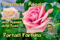 Virgin Mary, Madonna, Album, Flowers, Plants, Poster, Facebook, Link, Frases
