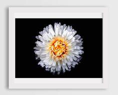 flower pics dining room wall art decor white chrysanthemum