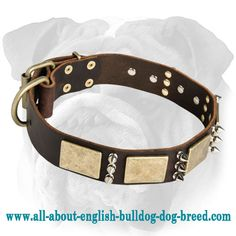 Riveted #Leather #English #Bulldog #Collar with Plates and Spikes $69.90 | www.all-about-english-bulldog-dog-breed.com